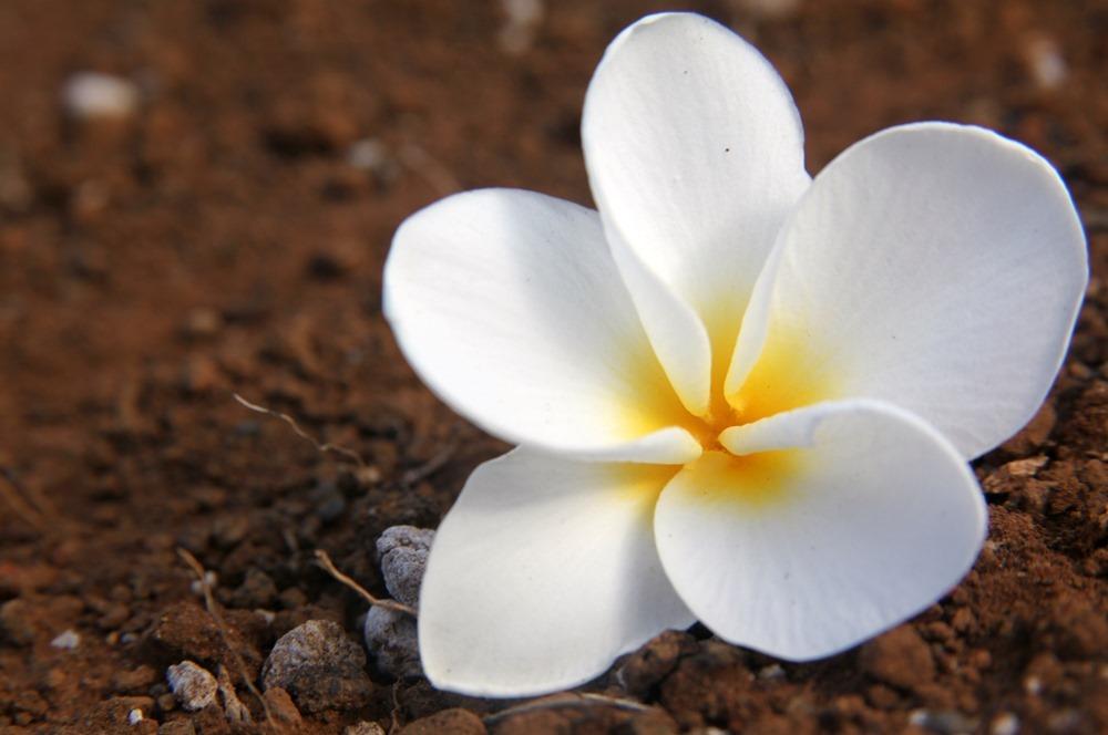 Maui%2C Hawaii 2009 343-501104819-O